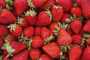 Gesunde Erdbeeren